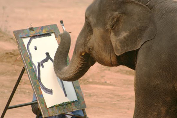 Animal Artists around the World