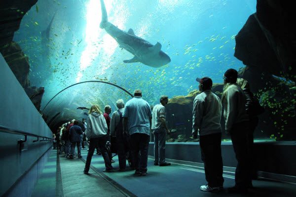 The-Georgia-worlds-largest-aquarium