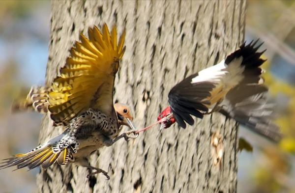 Photography Birds in Action