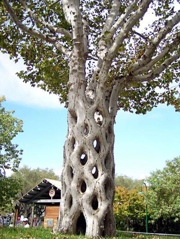 Unusual-trees-around-the-world