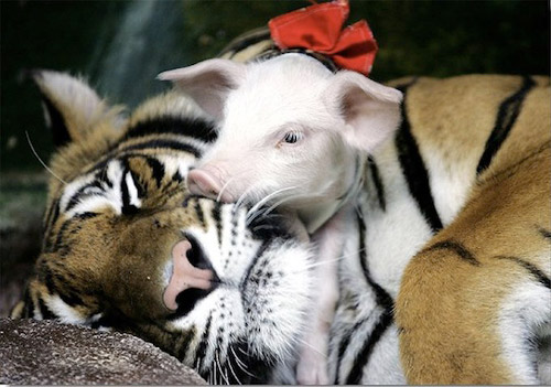 Animal Friendship