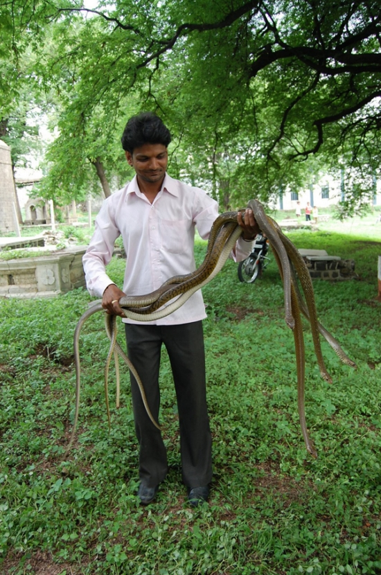 Playing with Snakes