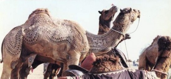 Unique Art on Camel at the Bikaner Camel Festival, Rajasthan, India
