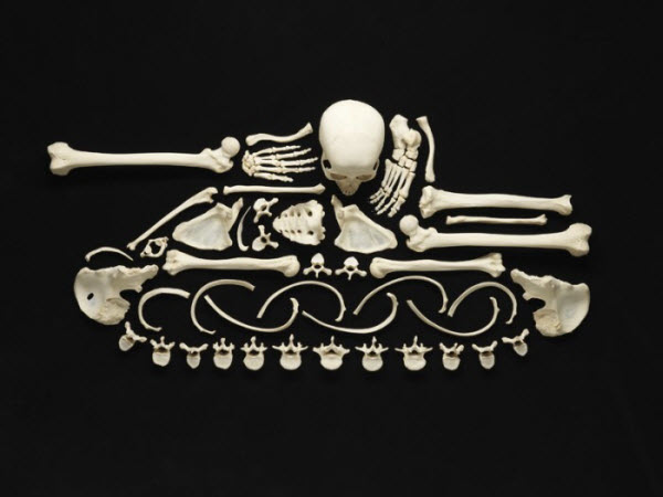 Art Made From Human Bones by Francois Robert