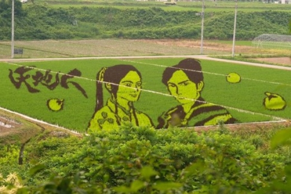 Spectacular Rice Paddy Crops art in Japan