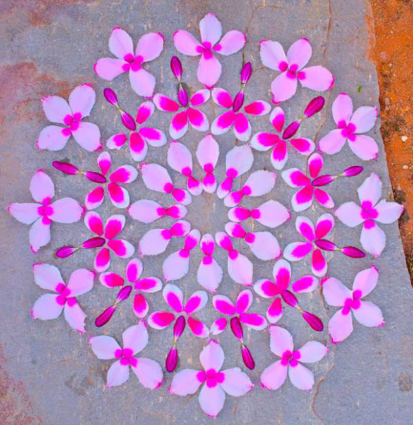 Spectacular Flower art by Kathy Klein from Arizona
