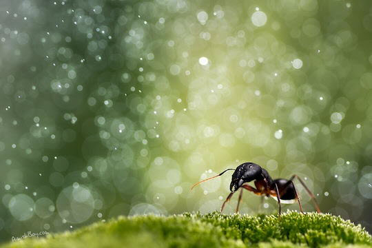Macro Photography by Nadav Bagim