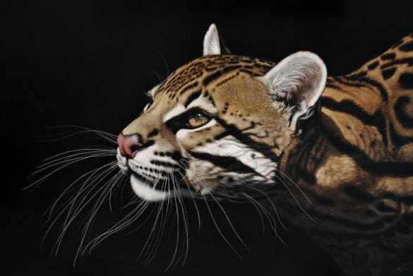Scratchboard Animal Portrait Paintings by Heather Lara from California